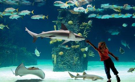 Google Aquarium   Museum Trip To The Newport Aquarium March 19th Oakwood Adventure
